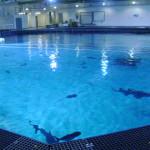 GA Aquarium Dive